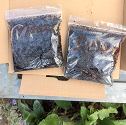 Two plastic bags containing live worms